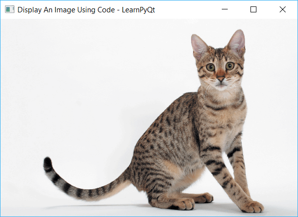 QMainWindow with Cat image displayed