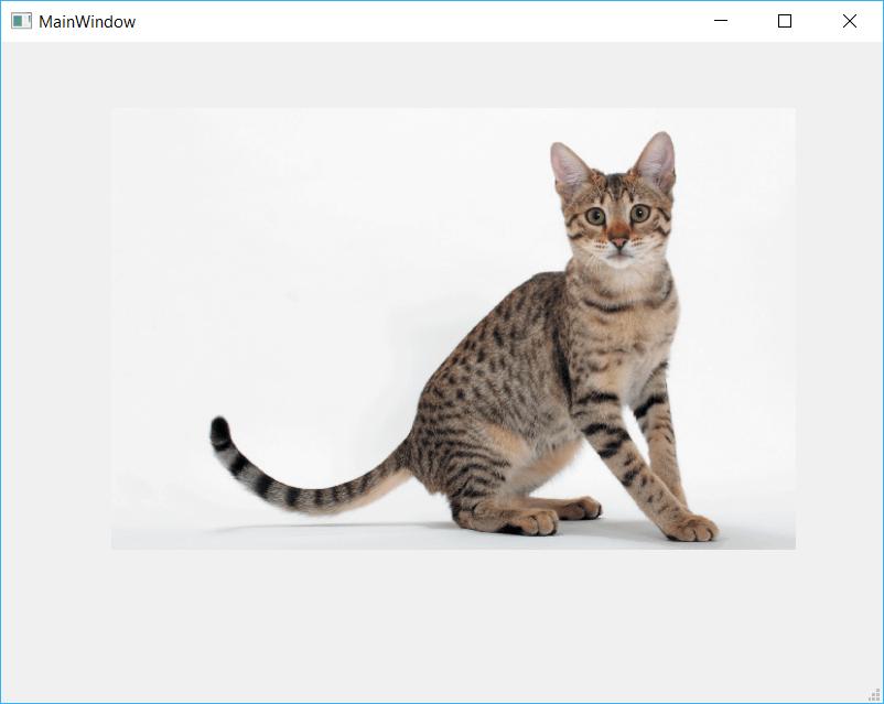 QtDesigner application showing a Cat